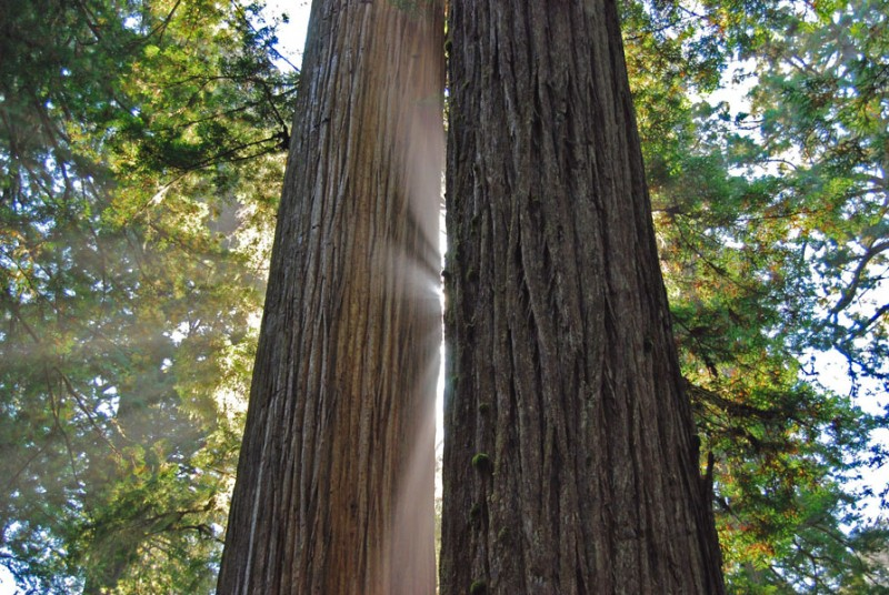 Holz Foto: Remo Sacherer