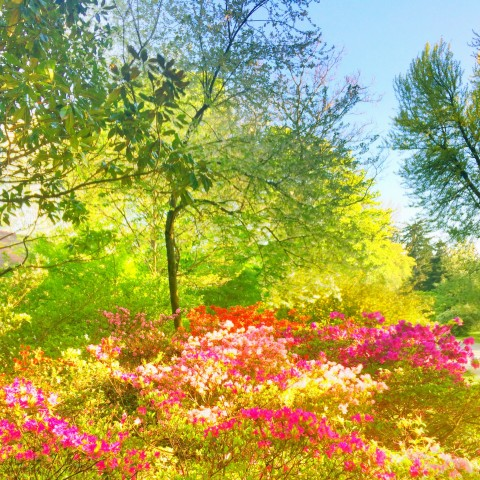 Das Holz-Element: Frühling in der Qigong Akademie Cooper
