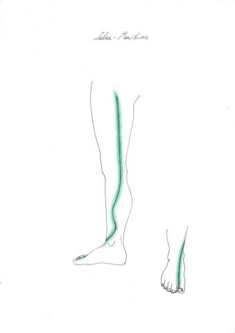Lebermeridian am Bein
